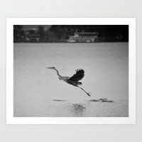 Blue Heron On Canandaigu… Art Print
