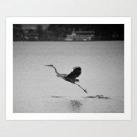 Blue Heron on Canandaigua Lake 2013 Art Print
