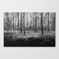 Forest in Rain - Black and White Collection Canvas Print