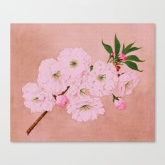 Ichi-yo - Single Leaf - Cherry Blossoms Canvas Print
