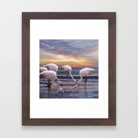 Flamingos feeding Framed Art Print
