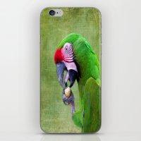 Green Macaw iPhone & iPod Skin