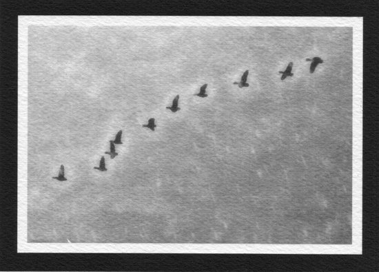 Morning Flight Of Geese Art Print
