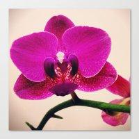 Orchidaceae Canvas Print