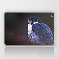 PEREGRINE FALCON PORTRAI… Laptop & iPad Skin