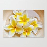 Plumeria Blossoms Canvas Print