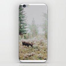Moose 1 iPhone & iPod Skin