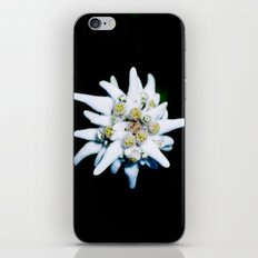 Single isolated Edelweiss flower bloom iPhone & iPod Skin