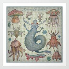 Art Print - Marine Curiosities II - Vladimir Stankovic