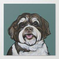 Wallace the Havanese Canvas Print