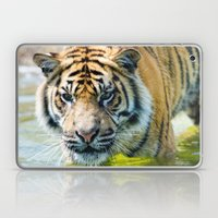 Tiger in the water  Laptop & iPad Skin