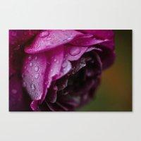 Petals & Raindrops Canvas Print