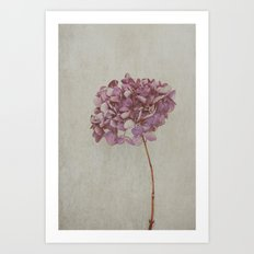 Beautiful Vintage Hydrangea Art Print