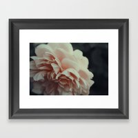 Wildeve Rose No. 2 Framed Art Print