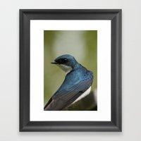 Tree Swallow - Ottawa, ON Framed Art Print