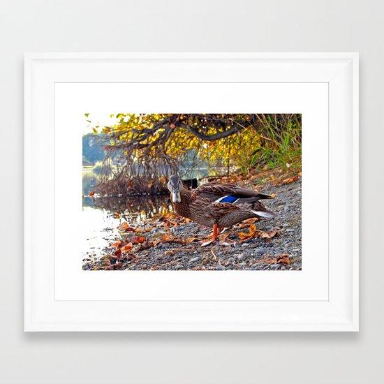 Wapato duck Framed Art Print