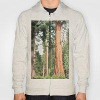 Giant Sequoia Hoody
