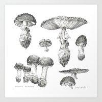 Amanita Muscaria Mushroo… Art Print