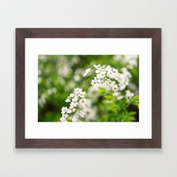 Snow Willow Framed Art Print