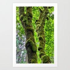 Moss-Covered-Maple Art Print