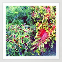 greenhouse vibes Art Print