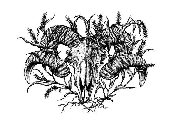 Ram skull in wheat Art Print