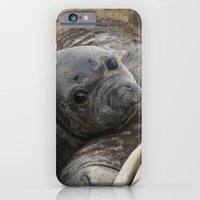 iPhone & iPod Case featuring elephant seal pup by Katie Pelon
