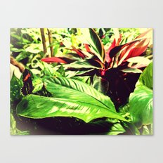 butterfly. Canvas Print
