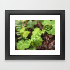 Unfurled Ferns Framed Art Print