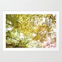 Fall Canopy Art Print