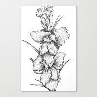 Gladiolus Canvas Print