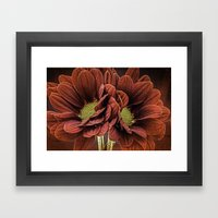 Red Chrysanthemum Duo Framed Art Print