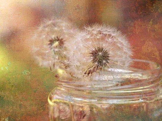 Dandelion Still Life Art Print
