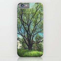 The Swing Tree iPhone 6s Slim Case