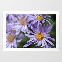 Daises Everywhere Art Print