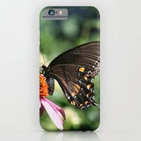 Eastern Tiger Swallowtail - Black Morph iPhone 6 Slim Case