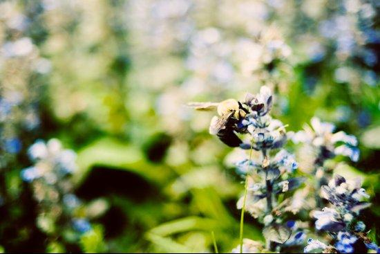 SWEET BEE Art Print
