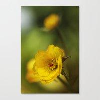 yellow. Canvas Print