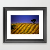 Vineyard In Northern Cal… Framed Art Print