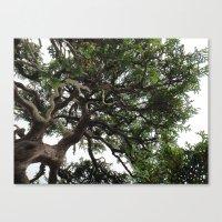Bonsai Tree Canvas Print