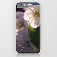 White Blossom iPhone 6 Slim Case