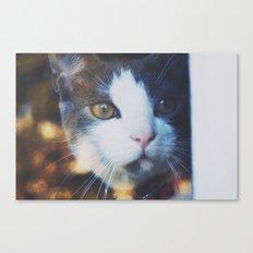 Leo looking through a window Canvas Print