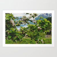 norwegian cherry blossom  Art Print
