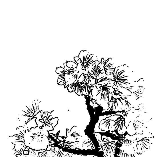 Cherry Blossom #7 Art Print