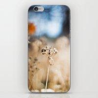 Fairy Land iPhone & iPod Skin