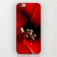 Red Amaryllis iPhone & iPod Skin