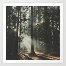 Sunbeam Woods Art Print