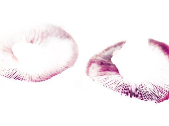 Mushroom Project - 3 Art Print