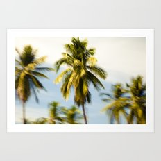 Palm Glimps by Boone Speed Art Print