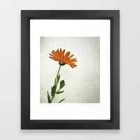 Bee magnet Framed Art Print